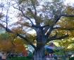 ◗한국의 가을절들